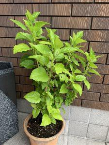 iPhone XS Max植物画像③